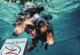 """""""La psicologia dello Zorba"""" - amazing dog 1"""